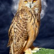 Bubo bubo eagle owl night bird full moon — Stock Photo
