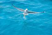 Bird seagull on sea water in ocean — Stock Photo