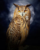 Bubo bubo eagle owl night bird full moon — Zdjęcie stockowe