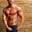 Muscle shaped man posing on gym brick wall — Photo
