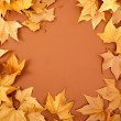 Autumn fall dired leaves border fame on brown - Stock Photo