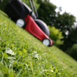 Lawnmower on grass — Stok fotoğraf