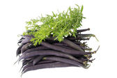 Blue beans — Stock Photo