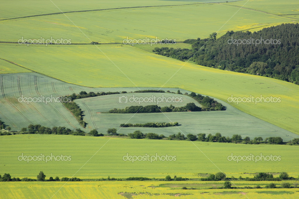 Aerial view of flowering part of arable land and rapeseed fields  Stock Photo #10729170