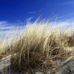 Dune grass — Stock Photo #9632849