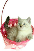 Kitten in a basket — Stock Photo