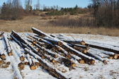 Forest after felling — Stock Photo