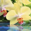 Royalty-Free Stock Photo: Orchid on the water
