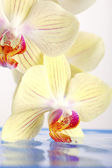 Orchid on the water — Stock Photo