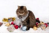 Kočka v zimě — Stock fotografie