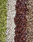 Row of Beans — Stock Photo