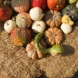 Royalty-Free Stock Photo: Pumpkin and Gourds