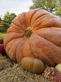 Giant Harvest Pumpkin — Stock Photo