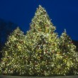 Outdoor Christmas Tree — Stock fotografie