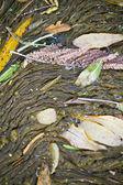 Río condensada escombros — Foto de Stock