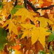 Beautiful autumn tree branches — Stock Photo