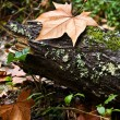 Tree stump on forest — Stockfoto #8906710