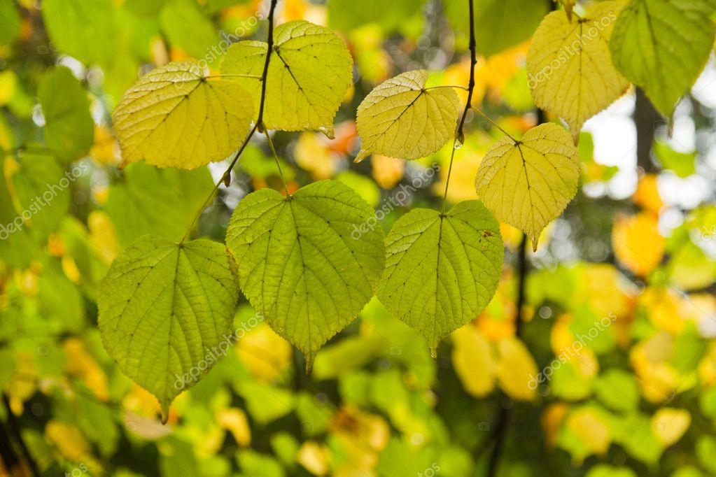美丽一棵树上的叶子