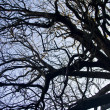 Intricacy on tree branches — Stock Photo