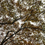 Beautiful autumn tree branches — Stock Photo
