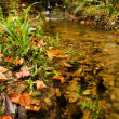Beautiful creek in forest — Stockfoto #8960872