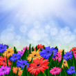 Colorful daisy gerbera flowers in a field - spring background — Stock Photo