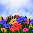 Colorful daisy gerbera flowers in a field - spring background - Stockfoto