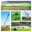 Stock Photo: Collage of irrigation images