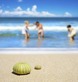 Beach scene with two dead sea urchin shells — Stock Photo