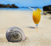 Beautiful sea shell on a tropical island beach with fruit cocktail in background — Stock Photo