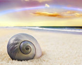 A Beautiful perfectly shaped sea shell on the beach — Stock Photo
