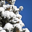 Winter tree branches — Stock Photo #8770798