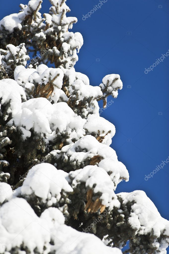 Beautiful winter tree branches — Stock Photo #8770798