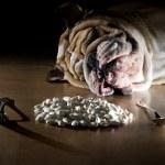 English bulldog with beans — Stock Photo #9656123