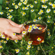 Hand with cup of herbal tea and chamomile — Stock Photo