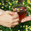 Stock Photo: Hand with cup of herbal tea and chamomile