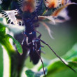 Love insects. Two beetle sitting on a plant. — Stock Photo
