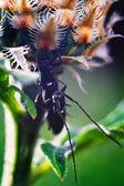 älska insekter. två skalbagge sitter på en växt. — Stockfoto