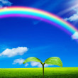 Plant in rainbow sky — Stock Photo