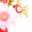 Bouquet of daisy flowers - Stock Photo