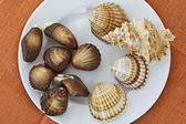 Chocolate sweets and seashells — Stock Photo