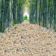 Stock Photo: View of fallen dried leaves, perfect straight path along e