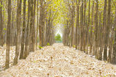 Pathway in the forest full of fallen dried leaves. Road to a be — Stock Photo