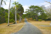 Colorful trees by the road in Panama during autumn time — Stock Photo
