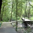 Stock Photo: Mangrove forest conservation area