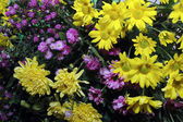 Series of colorful fresh flowers — Stock Photo