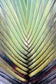 Fã de banana de detalhe de textura e padrão — Foto Stock