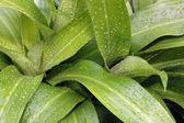 свежие зеленые растения — Стоковое фото