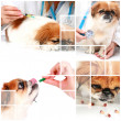 Veterinary care. - Stockfoto