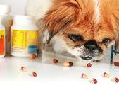 Veterinary care. — Stock Photo